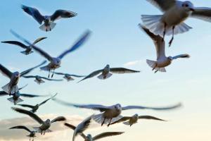 birds-khjG--621x414@LiveMint-1