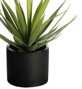 lx-product-plant-v2-3